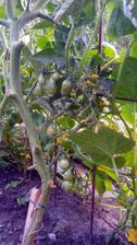 rajcinky v nasej dzungli - uz aby boli