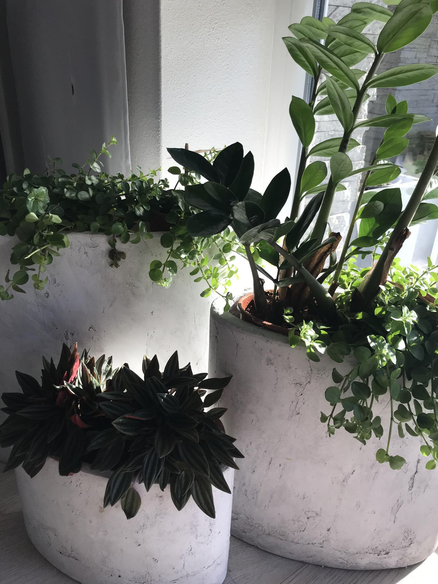Život v roce 2021 - Na zahradě jaro postupuje pomalu, tak zatim radost z domácího kvítí🌱