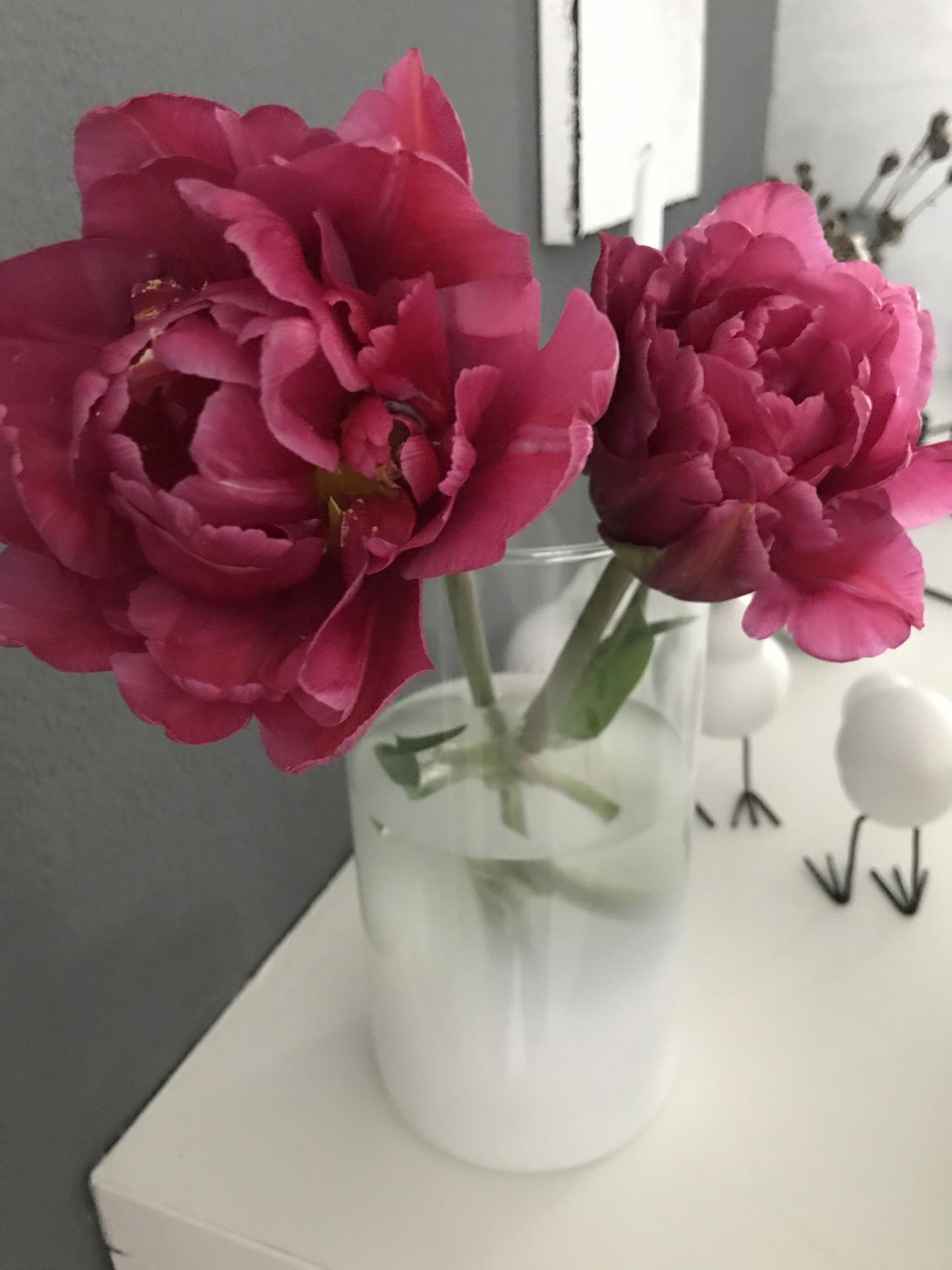 """Život v roce """"jedna"""" - Tulipány ze zahrady- vypadají jako pivoňky👌"""