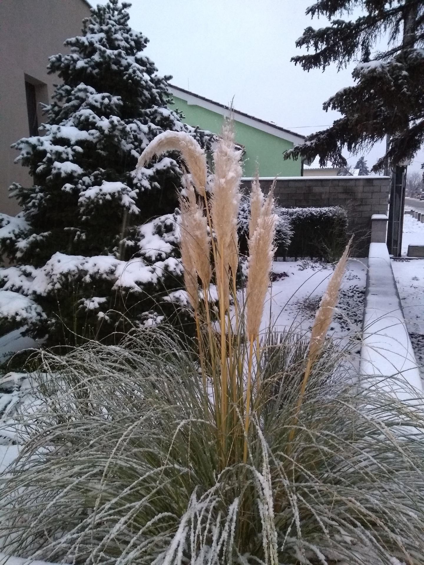 Vonku je lepšie ako vnútri 2021 - Február, tráva sa sama rozviazala...