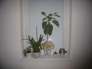 okno v hale