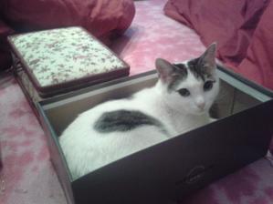 Můj bobek v krabici od bot