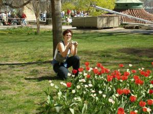 Tulipánky tulituli .o)