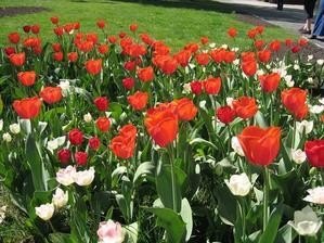 Kvetlo to nádherně