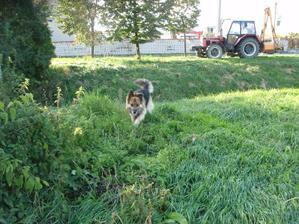 náš strážny psík