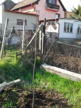 postav dom, zasad strom :-)