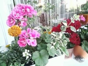 konečne sa mi kvetinky rozrastajú a kvitnú