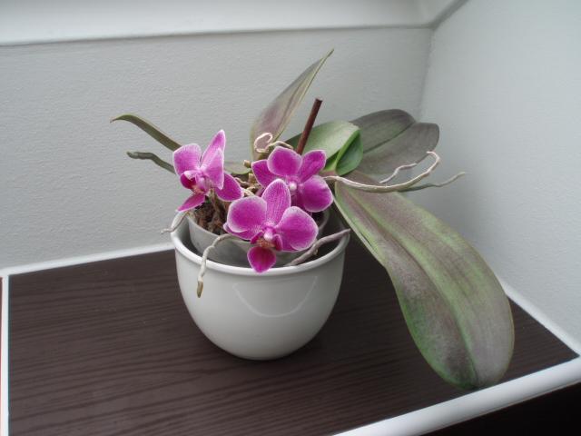 Kuchyň a postupné zabydlování - Od té doby, co ji mám na okně v koupelně, tak pořád kvete.