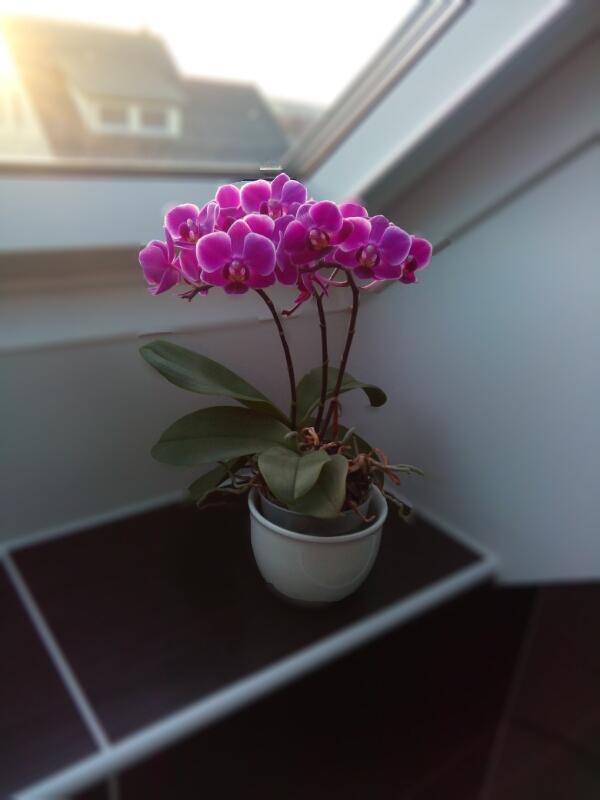 Kuchyň a postupné zabydlování - Moje koupelnová orchidej o Vánocích:-)