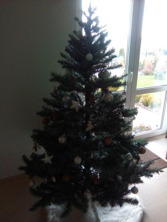 Už máme stromeček!