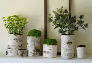 Akcent dřeva... na živé rostlinky