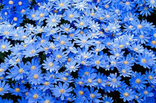 INSPIRACE - Kombinace s modrou (odstíny modré, s bílou, s černou, se zlatou, se zelenou, s hnědou, ...) - Obrázek č. 13
