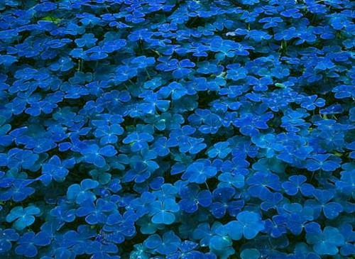 INSPIRACE - Kombinace s modrou (odstíny modré, s bílou, s černou, se zlatou, se zelenou, s hnědou, ...) - Obrázek č. 15