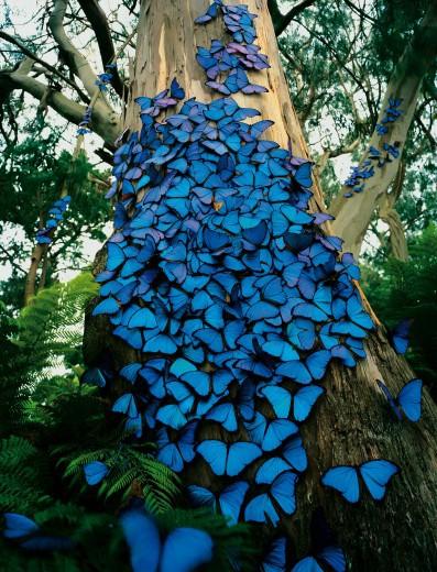 INSPIRACE - Kombinace s modrou (odstíny modré, s bílou, s černou, se zlatou, se zelenou, s hnědou, ...) - Obrázek č. 14