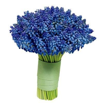 INSPIRACE - Kombinace s modrou (odstíny modré, s bílou, s černou, se zlatou, se zelenou, s hnědou, ...) - Obrázek č. 24