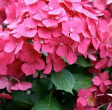 INSPIRACE - Kombinace s růžovou (odstíny, s bílou, s černou, s hnědou, s modrou, se žlutou, se zelenou) - Obrázek č. 171