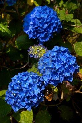 INSPIRACE - Kombinace s modrou (odstíny modré, s bílou, s černou, se zlatou, se zelenou, s hnědou, ...) - Obrázek č. 16