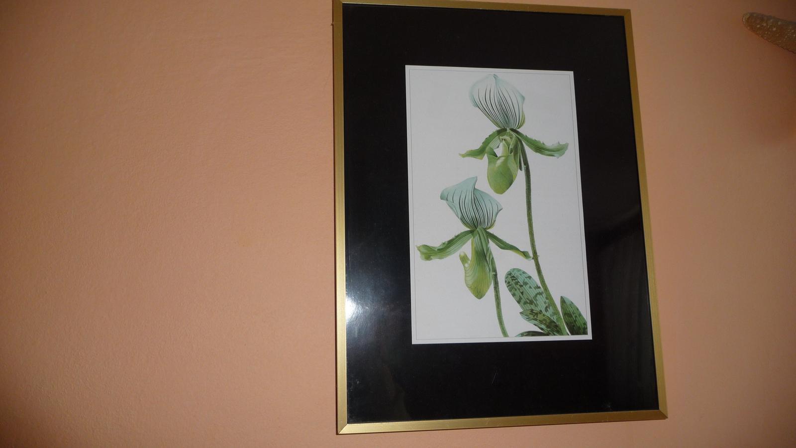 Obraz orchydea - Obrázok č. 1