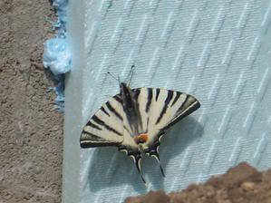 motýlik pomáhal :)