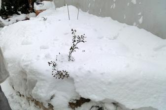 ružička dnes (1/2013)