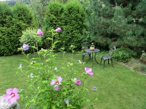 september - este kvitne ibistek, muskat a hortenzia