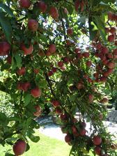 bio-jablcka (vôbec nestriekame)