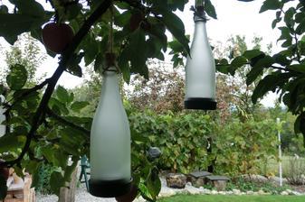 """""""svetielka"""" na jabloni (solarne flase)"""