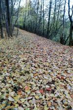 5 krokov od domu mame takyto krasny (jesenny) les