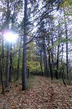 les za nasim domom, ako stvoreny na nedelne prechadzky