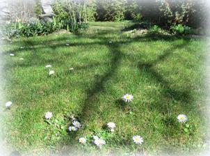 travnik pred vertikulovanim