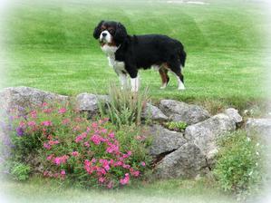 Ronko - môj krasny psicek