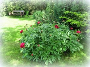 uz sa zacina otvarat (milujem moju zahradu)