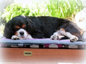 čas na opaľovanie :-)  /môj pes chce byt čierny :-D /