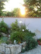 slnko zapada aj za bielu ružu :-)