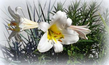 biela lalia