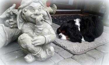 panelakovy pes nebude spat na betone :-D
