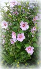 tiez ma pekne kvety