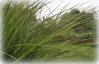 trava po dazdi