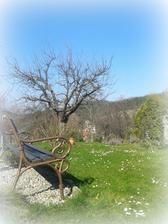 jar začala - plný trávnik sedmokrások...