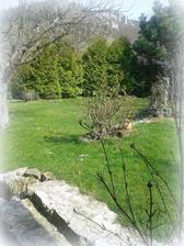 trávnik plný sedmokrások