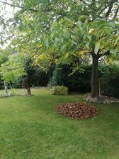 Prišla jeseň