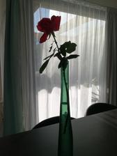 Posledná tohtoročná ruža zo záhradky skončila doma vo vázičke