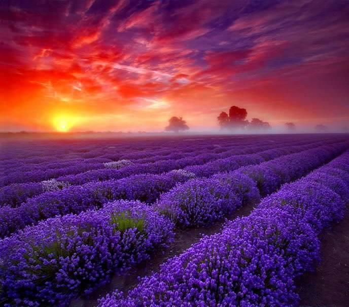 Naše sny a přání - Tohle chci jako obraz do obýváku!