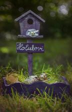 holubí hnízdečko pro Holubovi