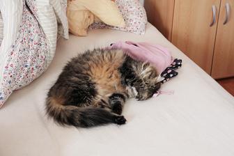 Musona rovnako ako moj priatel nema rada ked jej v spanku svieti svetlo do oci :)
