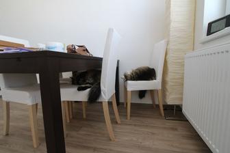 Kočičáci už s nami presťahovaní sa postupne zabývajú :)