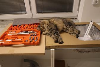 Musinka tiež pomáha montovať kuchyňu :)