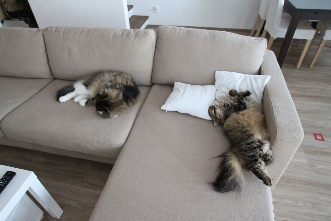 Naši kočičáci - O pár týždňov neskôr, ale rovnaké rozloženie na pohovke :) Je vzácne vidieť ich tak blízko seba, tak som to musela vyfotiť :)