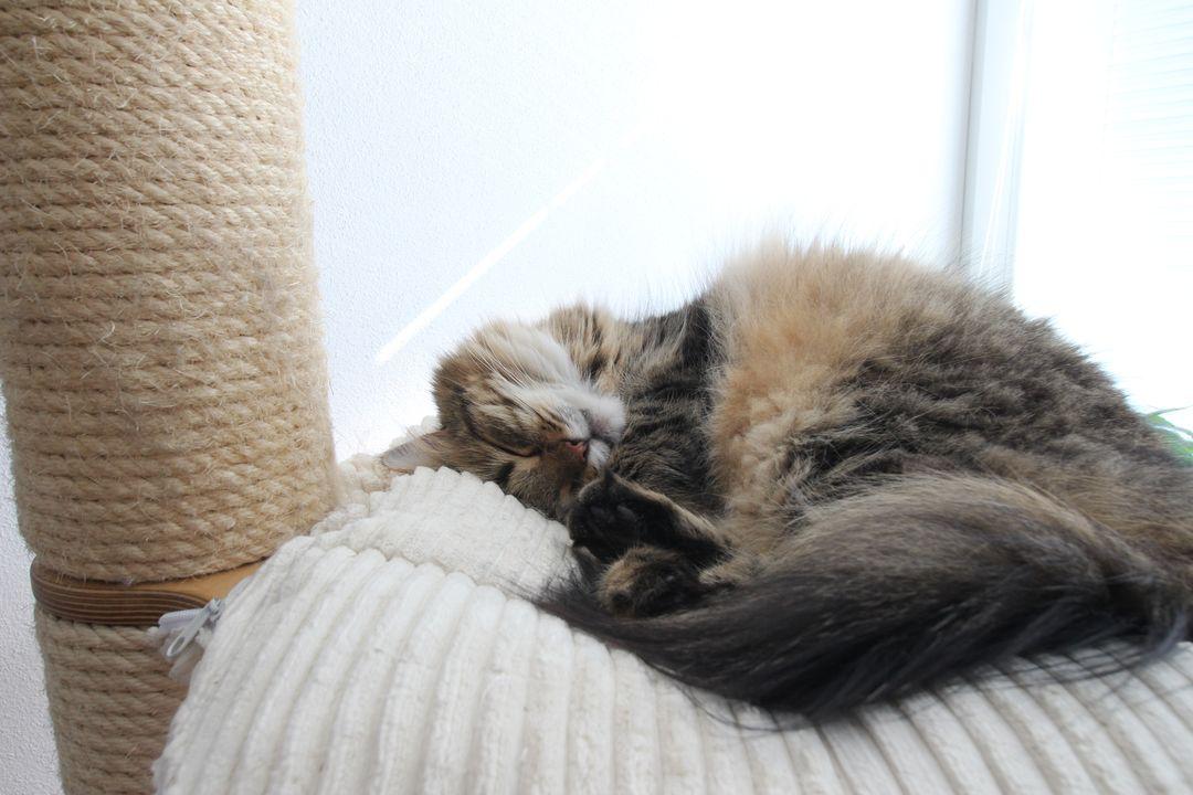 Naši kočičáci - Obrázek č. 18