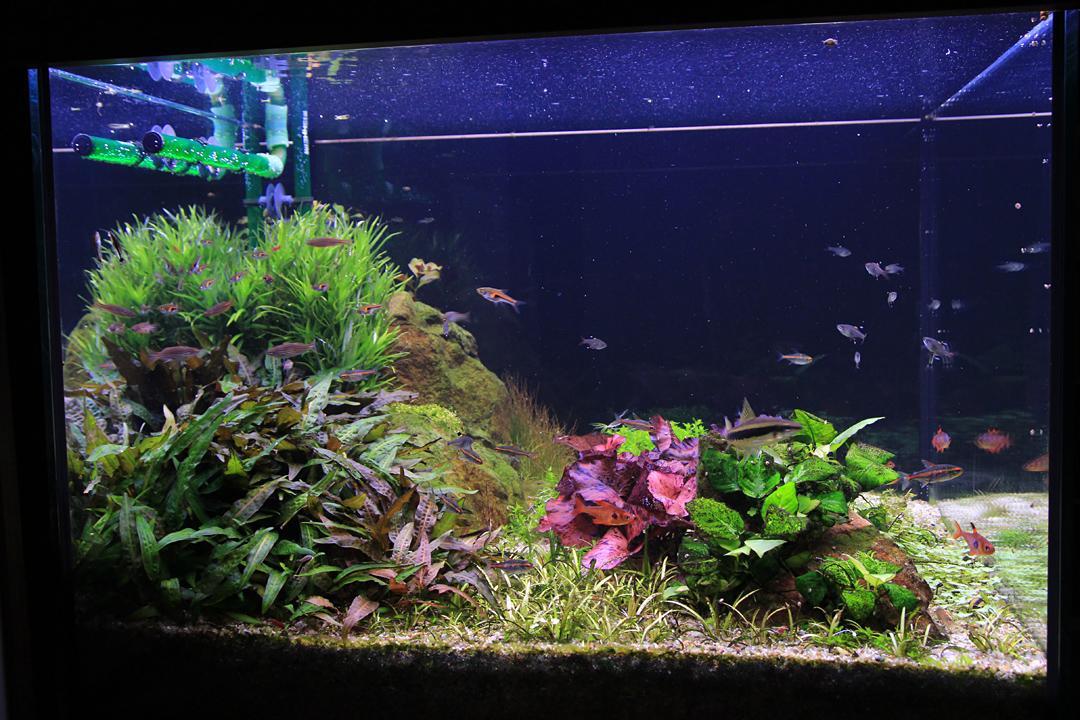 Naše nové akvárium - Obrázek č. 5